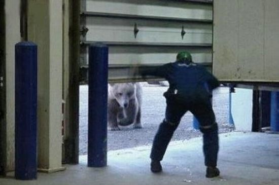 urso-bravo