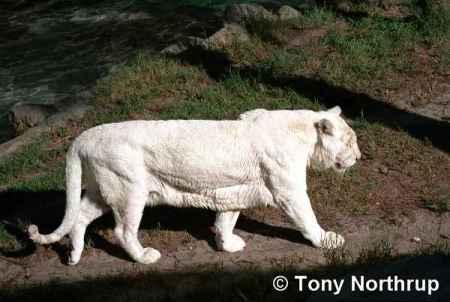 albinismo-57