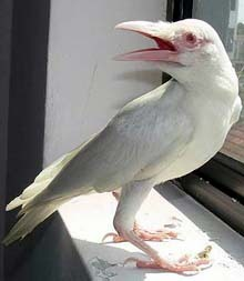 albinismo-71
