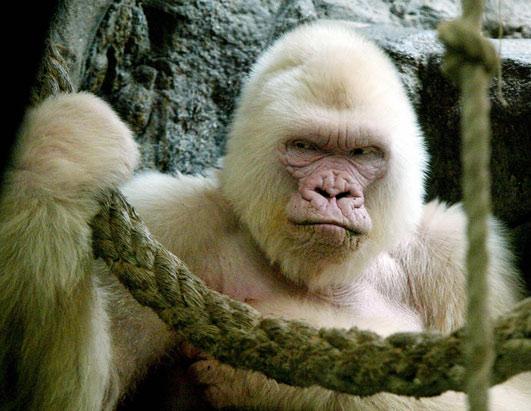 albinismo-851
