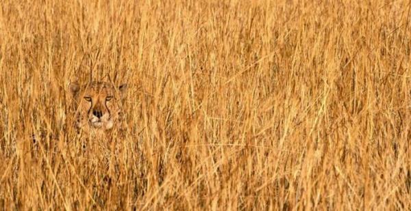 camuflagem-animal-3