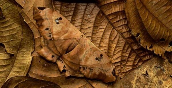 camuflagem-animal-4