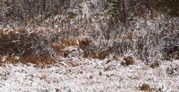 camuflagem-animal-7