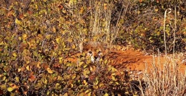 camuflagem-animal-9