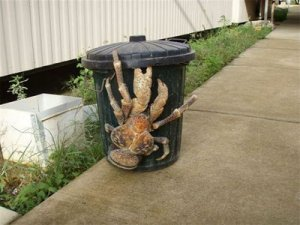 caranguejo gigante (2)