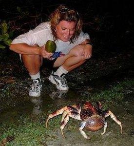 caranguejo gigante (4)