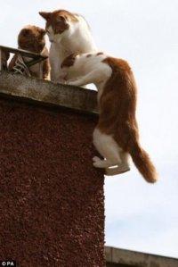 gato-aranha (2)