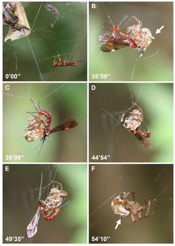 vespa paralisante-1