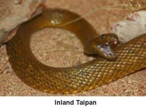 cobra-inland