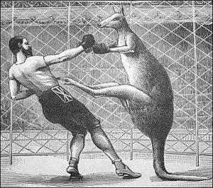 The Rock e Toretto vs 2 kangurus  Tecnica-canguru