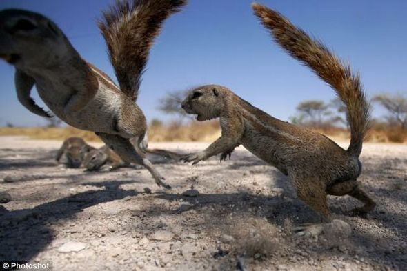 funny-fighting-squirrels-02