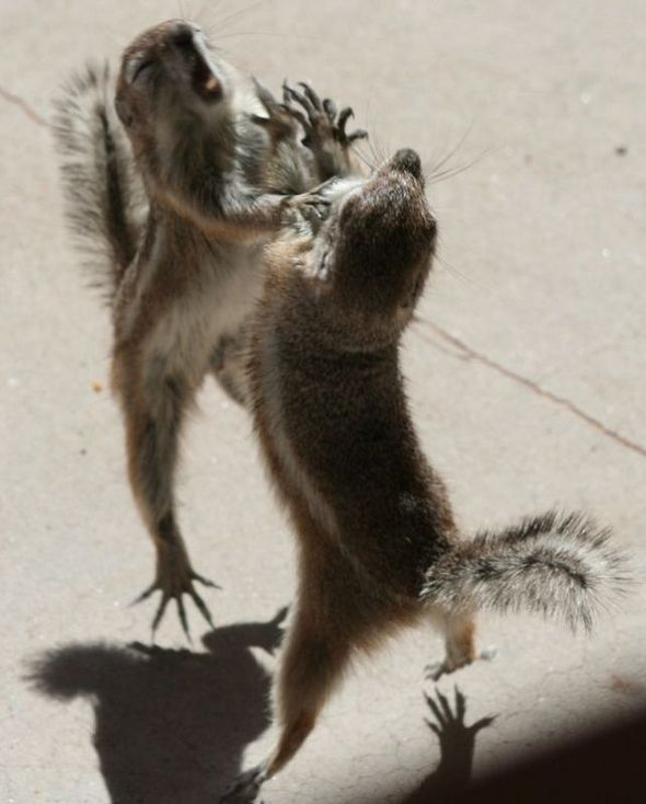 funny-fighting-squirrels-05