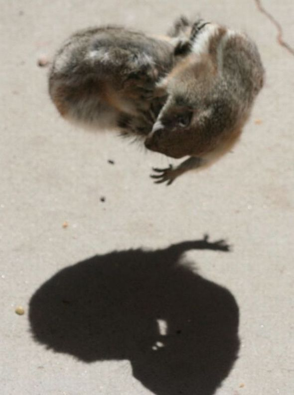 funny-fighting-squirrels-06