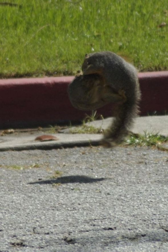 funny-fighting-squirrels-08