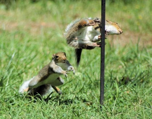 funny-fighting-squirrels-13