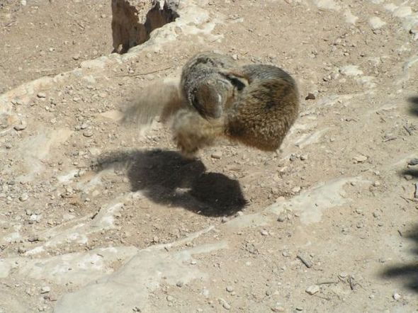 funny-fighting-squirrels-14