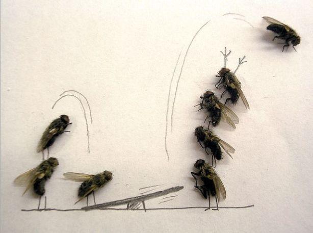 dead_flies_05
