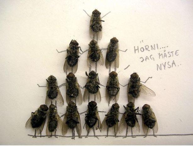 dead_flies_11
