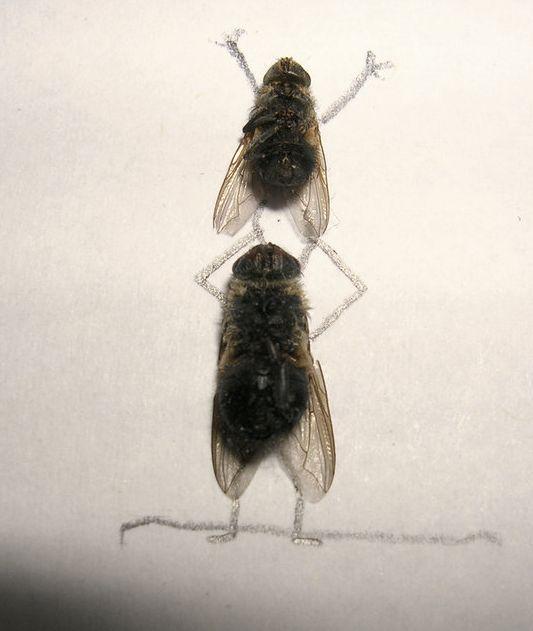 dead_flies_12