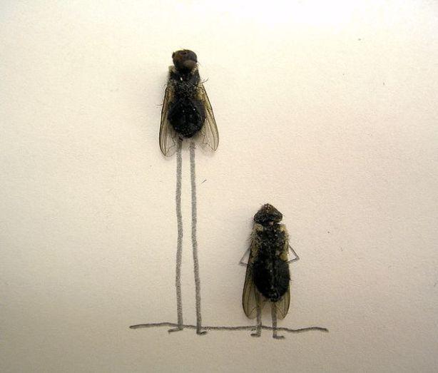 dead_flies_14