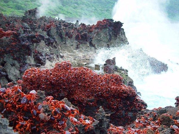 migração dos caranguejos (2)
