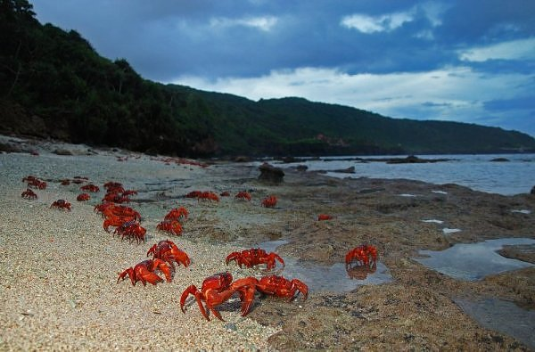 migração dos caranguejos (5)