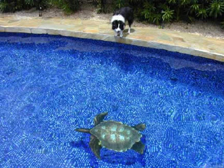 O artista das piscinas 3d dom fernando for Piscina 3d