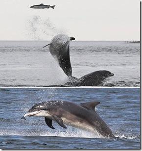 a96952_a589_10-dolphin