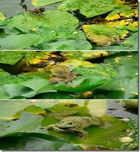 a96952_a589_2-frog-sparrow