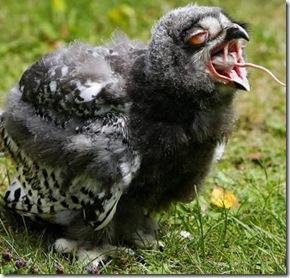 a96952_a589_6-owl-mouse