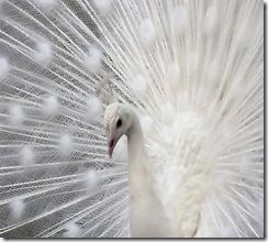 Albino_Animals_3x
