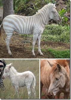 Albino_Animals_4a