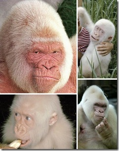 Albino_Animals_5