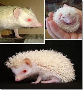 more_albinos_4a