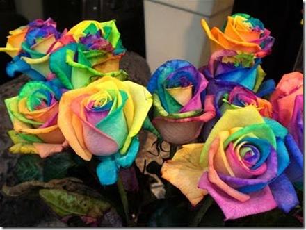 Rainbow-roses2