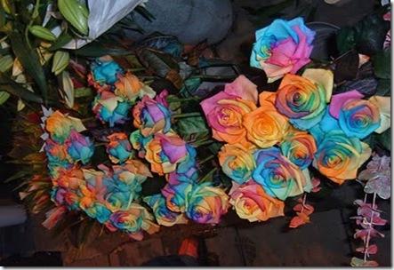 Rainbow-roses4