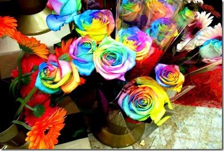 Rainbow-roses5