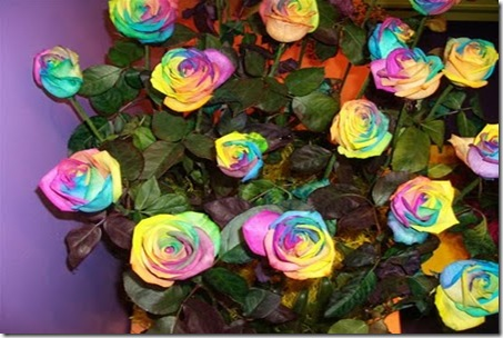 Rainbow-roses6