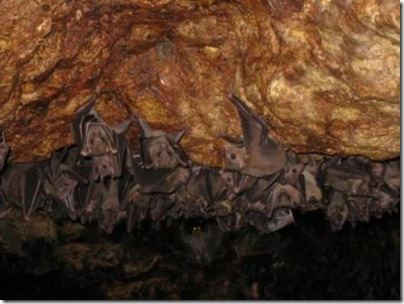 monfort_bat_cave_in_somalia_12