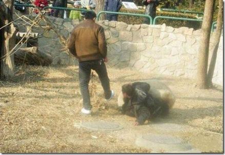 people_vs_animals_06