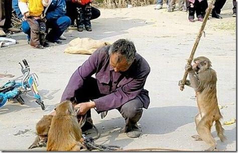people_vs_animals_30