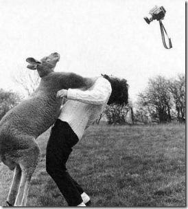 people_vs_animals_34