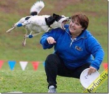 hilarious_dog_fails_01