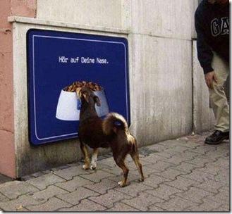 hilarious_dog_fails_02