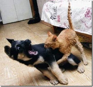 hilarious_dog_fails_07