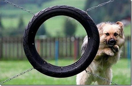 hilarious_dog_fails_21