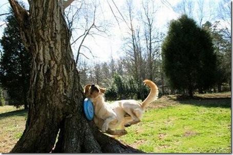 hilarious_dog_fails_24