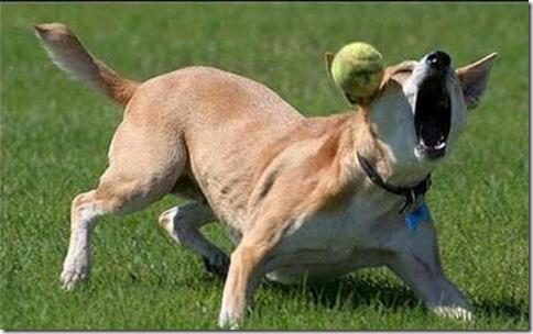 hilarious_dog_fails_25