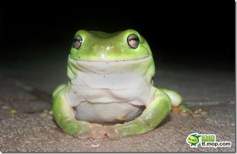 this_cute_frog_is_very_dangerous_predator_01
