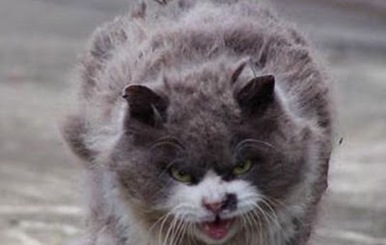 angry_cat_06